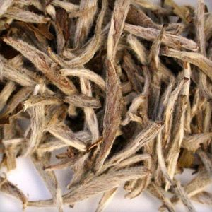 King of Silver Needles white tea